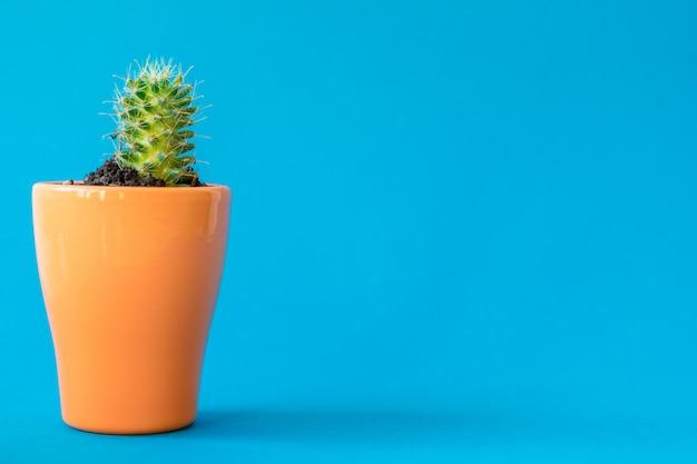 Tłustoszowata roślina w glinianym garnku nad błękitną ścianą