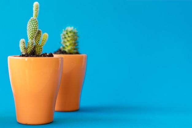 Tłustoszowata roślina w glinianym garnku nad błękitnym tłem