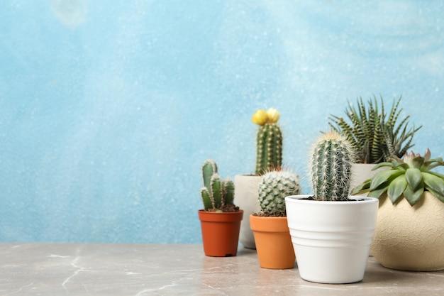 Tłustoszowate rośliny na popielatym stole. rośliny domowe