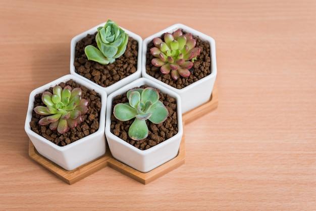 Tłustoszowate rośliny w garnkach na drewnianym stole, odgórny widok