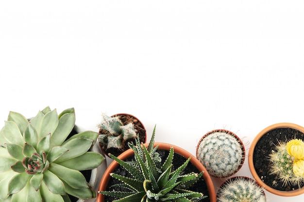 Tłustoszowate rośliny w garnkach odizolowywających, odgórny widok