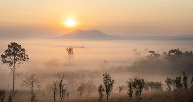 To jest zdjęcie góry pidsanulok tajlandii rano podczas wschodu słońca z mgłą i mgłą pasmo górskie i drzewa sihoulette.