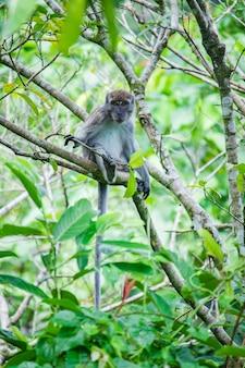 To zdjęcie przedstawia długoogoniastą małpę siedzącą na gałęzi drzewa