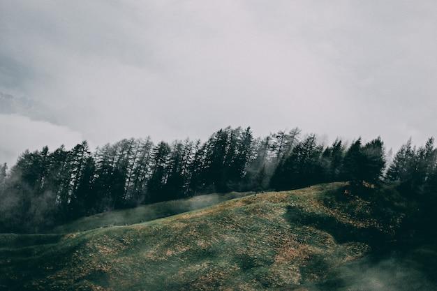 Toczne wzgórza z drzewami