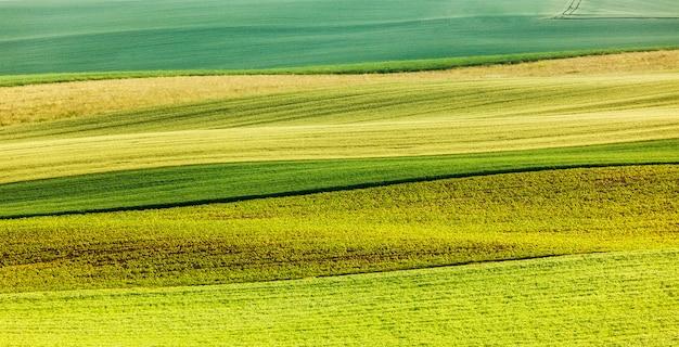Toczone pola