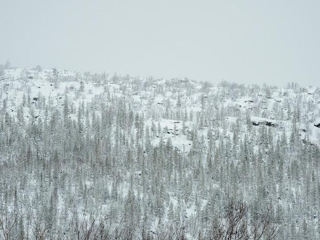 Toksyczny zimowy las na wzgórzu w pobliżu zakładu metalurgicznego w monchegorsk w rosji.