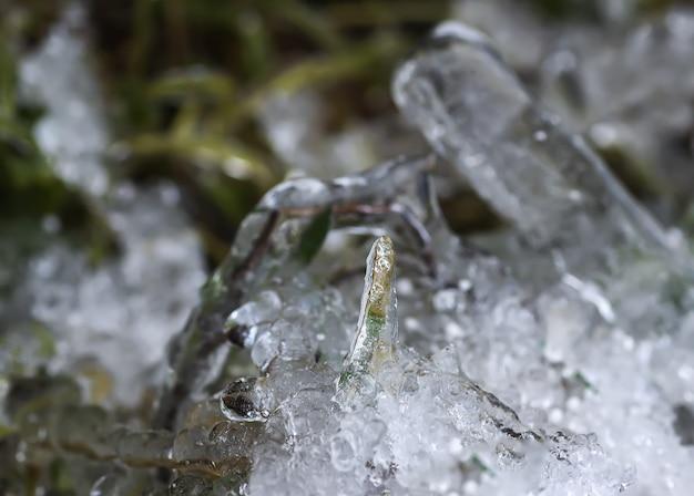Topniejący śnieg i lód na trawie w słoneczny zimowy dzień