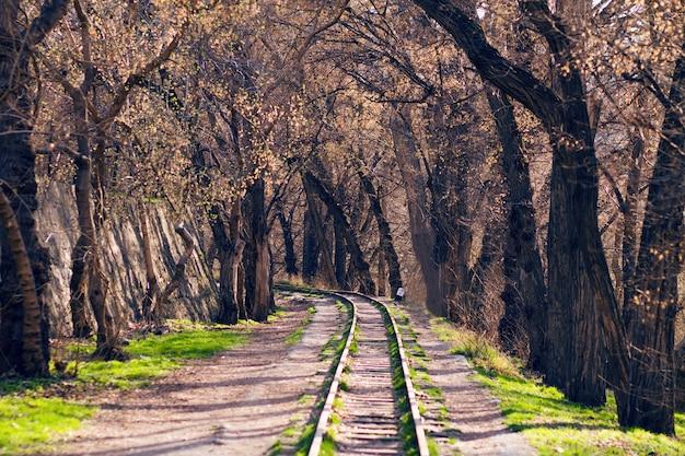 Tor kolejowy w lesie