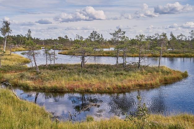 Torfowisko wysokie na łotwie. park narodowy kemeri. krajobraz
