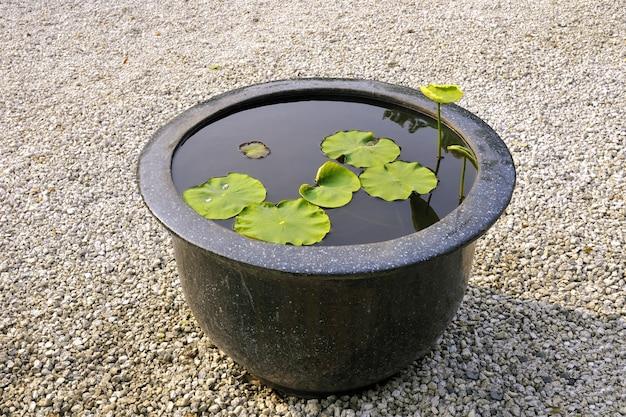 Tradycyjna japońska sceneria zen z dużą miską na wodę z rośliną lotosu w środku