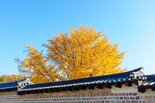 Tradycyjne koreańskie ceglane ściany i żółte drzewo ginkgo
