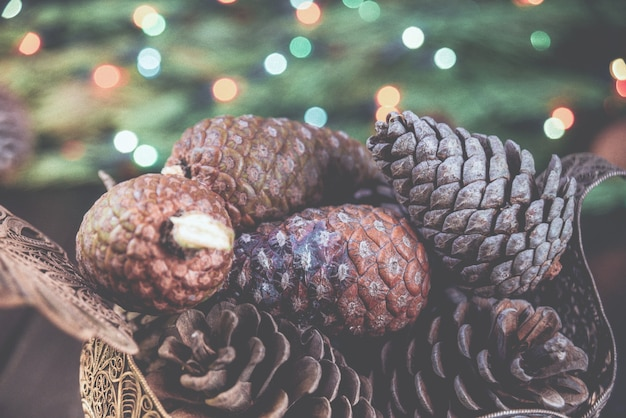 Tradycyjne świąteczne tło wiele brązowych bryłek na gałęzi świerka zieleni.