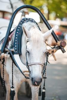 Tradycyjny fiaker powozów konnych w europie
