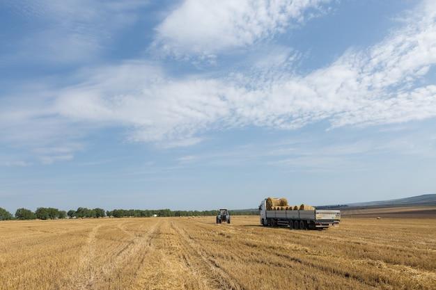 Traktor układa okrągłe bele słomy do przyczepy maszyny na skoszonym polu pszenicy.