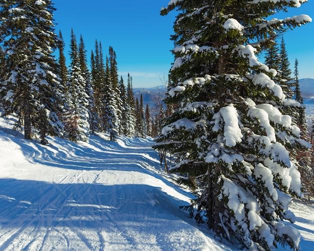 Trasa narciarska na szczycie góry. region kemerowo. ośrodek narciarski sheregeh. zejście dla narciarzy wśród zaśnieżonych sosen.