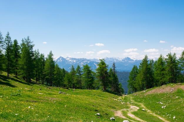 Trasa trekkingowa w parku narodowym dachstein, austria. z dala alpejskie góry i zielony las. błękitne niebo w letni dzień