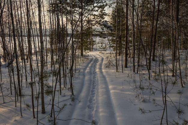 Trasy narciarskie w lesie. ścieżka w gęstym zaśnieżonym lesie