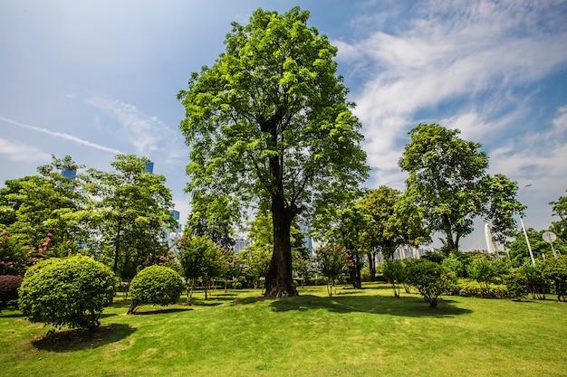 Trawa drzewa