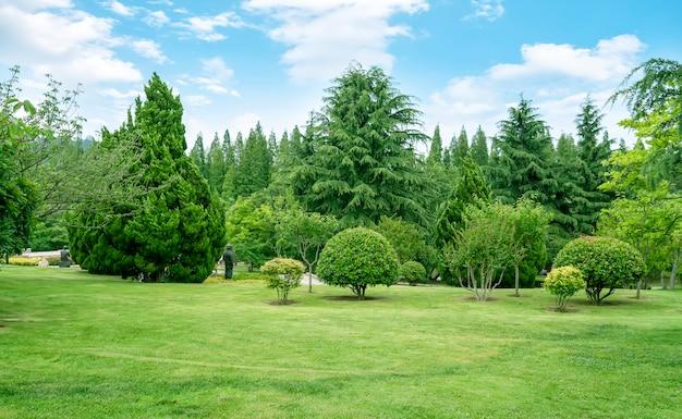 Trawa i drzewa w parku pod błękitnym niebem