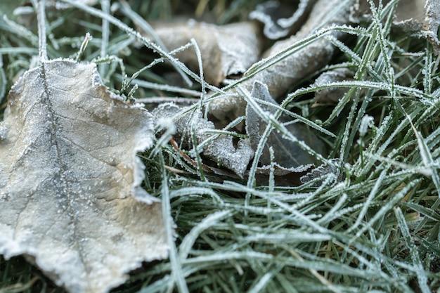 Trawa i liście zamarzły porannym przymrozkiem w świetle wschodzącego słońca wczesnego, zimnego poranka.