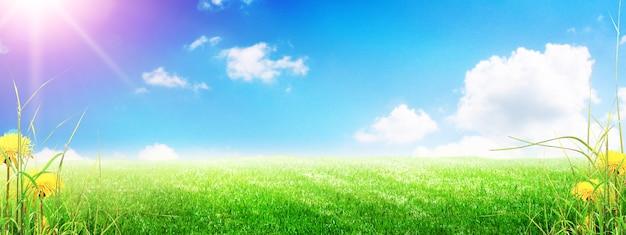 Trawa kwiat pole w wiosennym tle ze światłem słonecznym