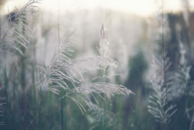 Trawa kwiat w natury polu, rocznika filtra wizerunek
