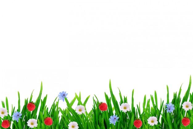 Trawa kwiaty truskawki na białym tle