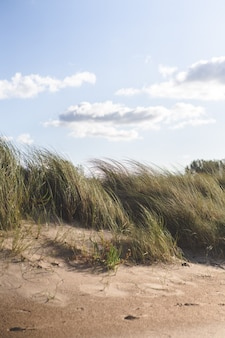 Trawa na plaży