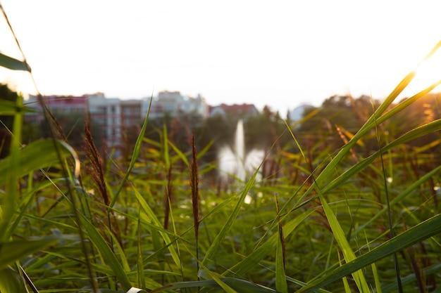 Trawa na stawie, fontanna i miejskie domy w tle lato w mieście