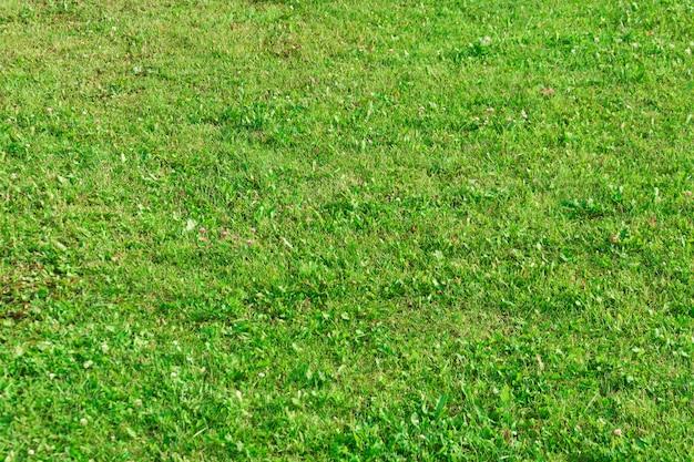 Trawa na zboczu trawnika