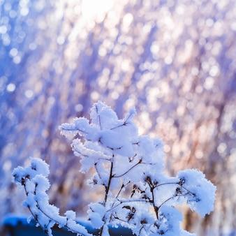 Trawa ostrza mrozu na słonecznym tle bokeh. zimowa abstrakcja przyrody.