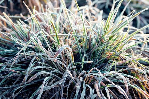 Trawa pokryta szronem. pierwszy mróz jesiennego poranka