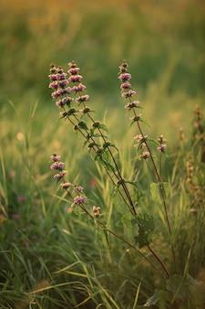 Trawa polna w ciepłych promieniach zachodu słońca