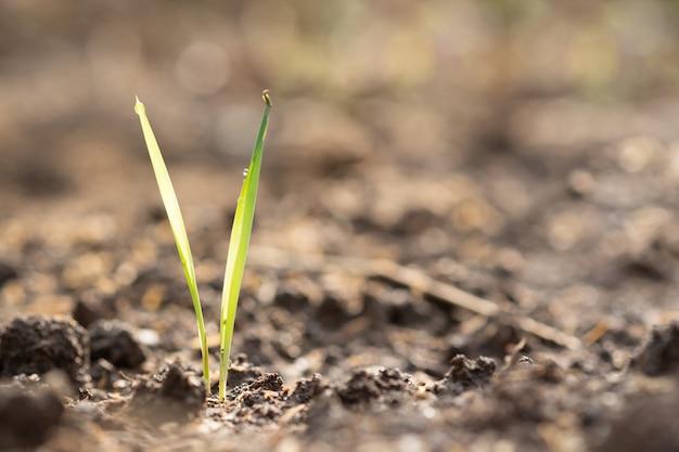 Trawa rośnie w glebie i copyspace