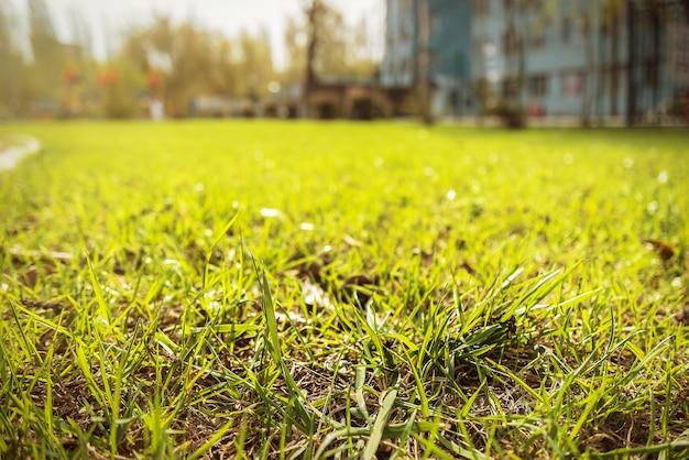 Trawa w parku. drzewa w przestrzeni