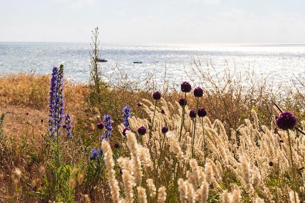 Trawa wydmowa wieje na wietrze nad morzem