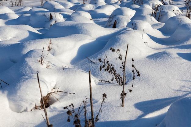 Trawa zimą