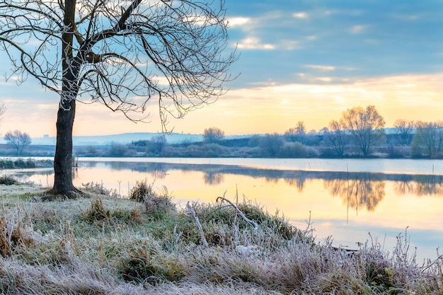 Trawę i drzewa nad brzegiem rzeki pokrył szron. samotne drzewo nad brzegiem rzeki o wschodzie słońca