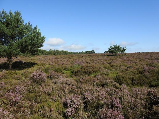 Trawiaste pole w słoneczny dzień w parku narodowym hoge veluwe w holandii