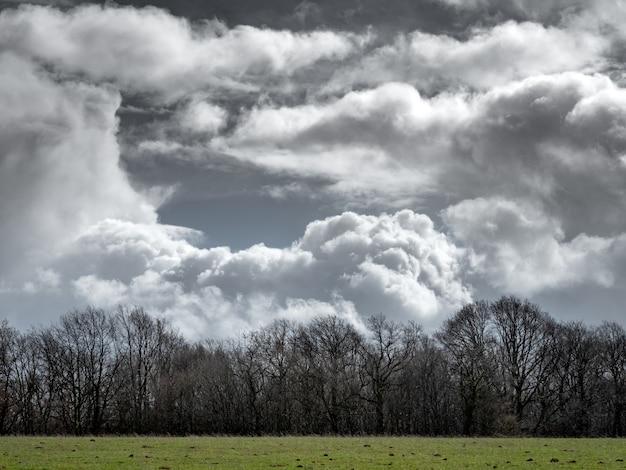Trawiaste pole z bezlistnymi drzewami w oddali i pochmurne niebo w tle