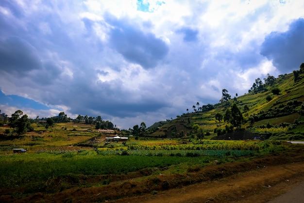 Trawiaste pole z budynkiem w odległości blisko wzgórza z drzewami i chmurnym niebem