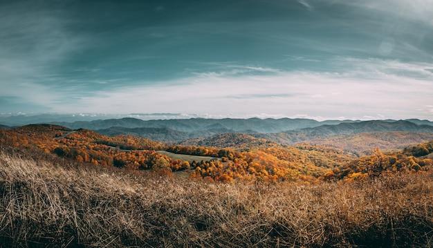 Trawiasty pole w chmurnym dniu