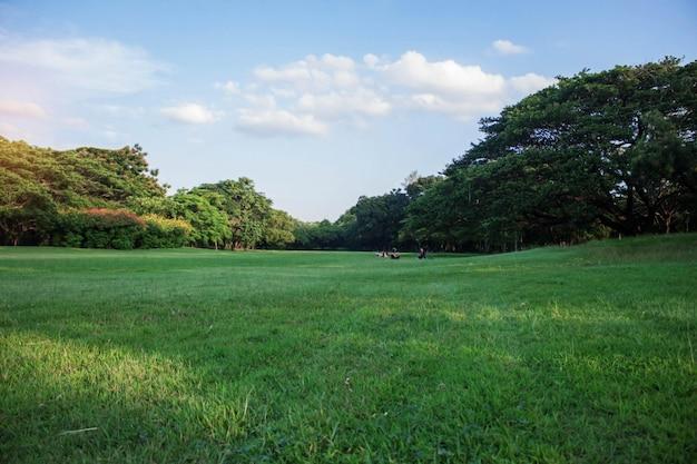 Trawnik i niebo w ogrodzie.