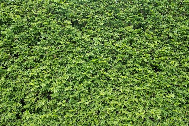 Trawnik pole spokojny jasny idylliczny