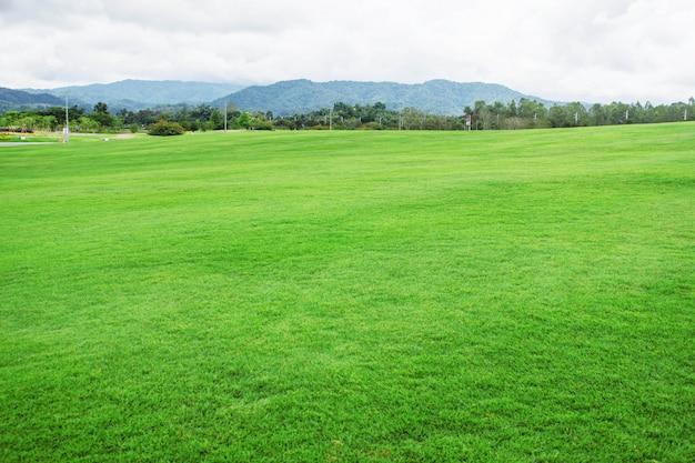 Trawnik z górskim tle.