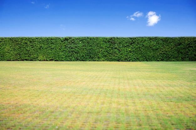 Trawnik z niebieskim niebem.