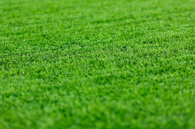 Trawniki, sztuczne tło sportowe