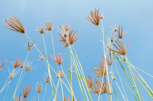 Trawy kwiaty na polu