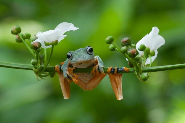 Tree frogs latająca żaba siedząca na gałęzi