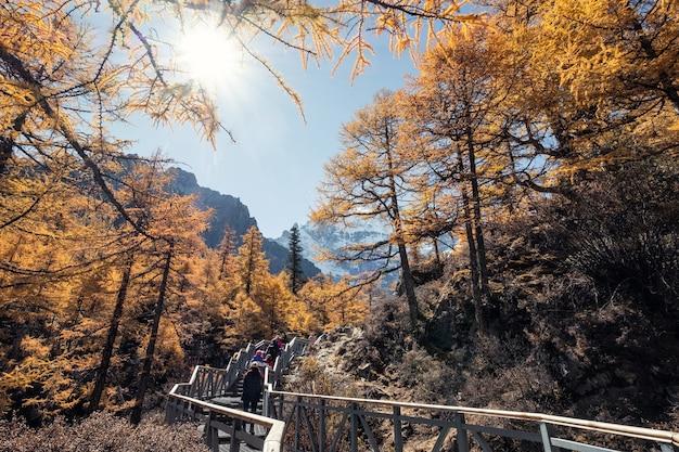 Trekking podróżny w jesiennym lesie ze świętą górą w słonecznym rezerwacie przyrody yading, chiny